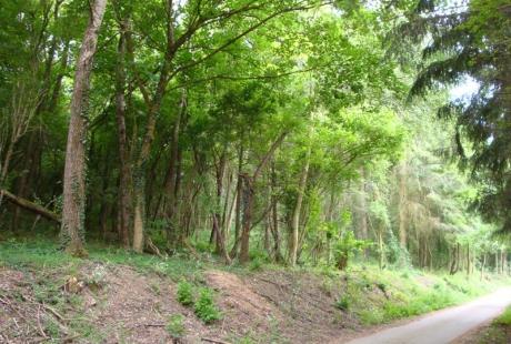 Naturwald Sermlingerweg